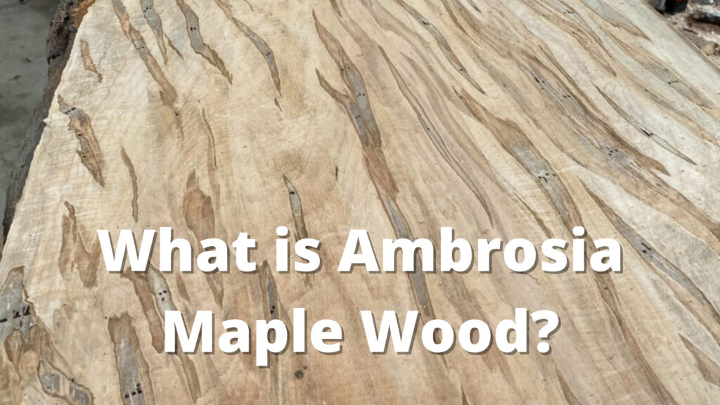 what is ambrosia maple wood