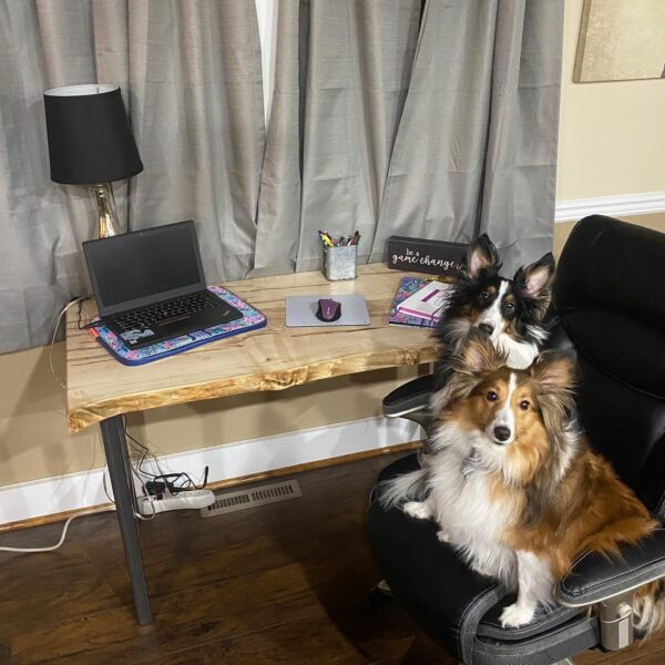 dogs on maple desk